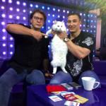 Алексей Воевода назвал бездомного кота Андрюшей в честь своего коллеги